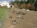 Wildschweingehege - panoramio.jpg