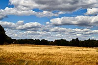 Wimbledon Common, View towards Windmill from the plain.jpg