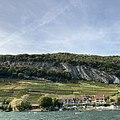 Wineyards next to Tüscherts.jpg