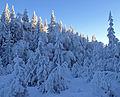 Winter forest (2138216668).jpg