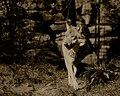 Wolf (125515313).jpeg