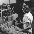 Woman slicing potatoes for potato chips (3724238502).jpg