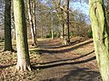 Woodland Path - Roundhay Park, Wetherby Road - geograph.org.uk - 1128291.jpg
