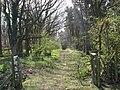 Woodland Path - geograph.org.uk - 393456.jpg