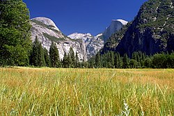 Yosemite meadows 2004-09-04.jpg