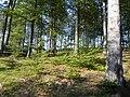 Zielona Góra, Szlak Kaszubski (Trail Kashubian) - panoramio (2).jpg