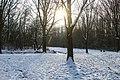 Zon door de bomen tijdens de winter in mallebos Spijkenisse.jpg