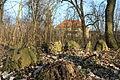 !-2014-stare-drzewce-dwor-kamienny-krag-abri.JPG