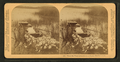 'Where the water lillies bloom in March.' - Florida, from Robert N. Dennis collection of stereoscopic views 3.png