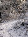 ^winterbiking - panoramio.jpg