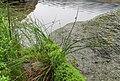 Čertovo jezero (10).jpg