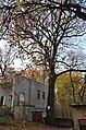 Багатовікове дерево дуба звичайного, Подільський район вул. Вишгородська, 69.jpg