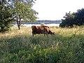 Берег Верхнерогачинского лимана. - panoramio.jpg