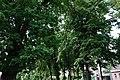 Виноградів, парк маєтку Перені.jpg