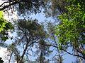 Дендрологічний парк 13.jpg