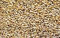 Зерно ячменя.jpg