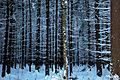 Зимние узоры - panoramio.jpg