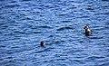 Из жизни байкальской нерпы близ Ушканьих островов 07.jpg