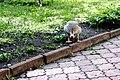 Київський зоопарк Гуска атакує 02.JPG