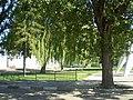 Кладовище радянських воїнів P6160262.JPG