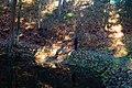 Парк виллы Рено. Фото 2.jpg