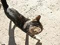 Россия, Вологда, Верхний Посад, ул.Мира, кошка, 17-47 13.07.2006 - panoramio.jpg