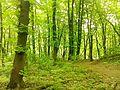 Снопківський парк 1.jpg