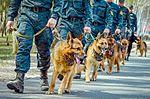 Собаки НГУ 4530 (19348642552).jpg