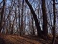 Украина, Киев - Голосеевский лес 221.JPG