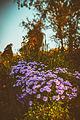 Цветок ботанического сада 12.jpg