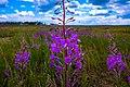 Цветы на полигоне - panoramio.jpg
