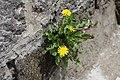 Վայրի բնություն-1 315.jpg