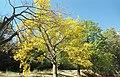 پاییز روستای لیلستان.jpg