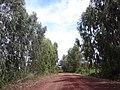 ถนนรอบ หนองกอมเกาะ - panoramio (1).jpg