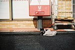 つながれた猫 (33417461996).jpg
