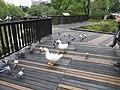 台大生態池 NTU Farm Eco Pond - panoramio.jpg