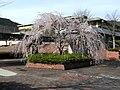 吉野運動公園(yoshino undoukouen) 2010-3-30 - panoramio.jpg