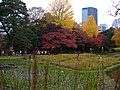 小石川植物園(2009.11.28撮影) - panoramio (3).jpg