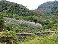 布虎梅園 Buhu Plum Garden - panoramio (2).jpg