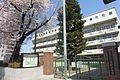 文京区立窪町小学校ー桜ー2015年.jpg