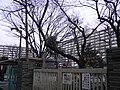 東十条 - panoramio - kcomiida (9).jpg