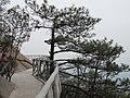 灵山迎客松 - panoramio.jpg