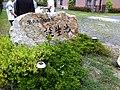 誕生池 - panoramio (2).jpg