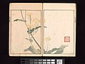 酒井抱一 画 『鶯邨画譜』-Ōson (Hōitsu) Picture Album (Ōson gafu) MET DP263371.jpg