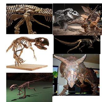 Ornithischia - Diversity of ornithischian dinosaurs.