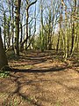 -2019-03-04 Cottage Plantation, Felbrigg, Norfolk.JPG