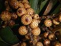 05704jfMidyear Orchid Plants Shows Quezon Cityfvf 12.JPG