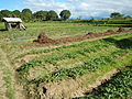 0581jfLandscapes Roads Vegetables Fields Binagbag Angat Bulacanfvf 29.JPG