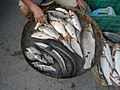 06586jfCandaba, Pampanga Market Fishes Foods Landmarksfvf 05.jpg