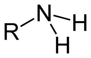 Carbon–nitrogen bond - Primary amine